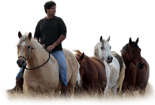 Dale&Horses